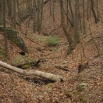 Looking down at the source of the creek, and the location of moonshine still #2